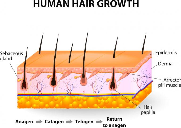 Nguyên nhân rụng tóc - World Beauty clinic